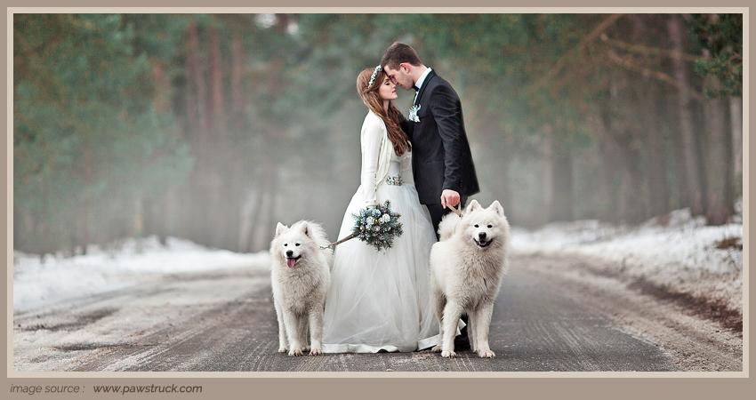 Main Article PIC _ Hewan Menggemaskan dalam Pesta Pernikahan