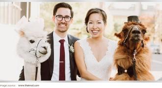 Main Article 2017 _ Hewan Unik dalam Resepsi Pernikahan